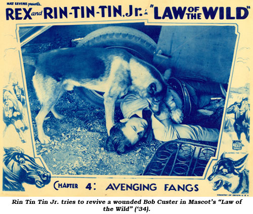 "Rin Tin Tin Jr. tries to revive a wounded Bob Custer in Mascot's ""Law of the Wild"" ('34)."