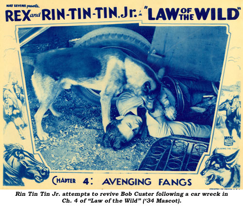"Rin Tin Tin Jr. attempts to revive Bob Custer following a car wreck in Ch. 4 of ""Law of the Wild"" ('34 Mascot)."