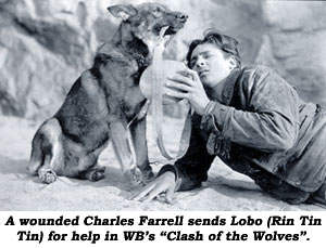 "A wounded Charles Farrell sends Lobo (Rin Tin Tin) for help in WB's ""Clash of the Wolves""."