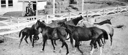 Gene with a group of blooded stock at his Melody Ranch.