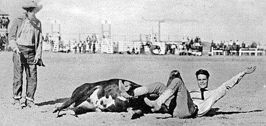 Rodeo champion Yakima Canutt wrestles a steer circa early '20s.