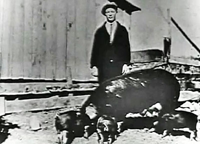 A very young Roy Rogers with his pet pig and her piglets.