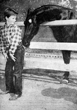"""Fury"" steals a carrot from Bobby Diamond in June 1956. The nine year old black stallion was owned by trainer Ralph McCutcheon."
