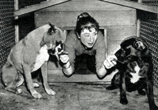 """Gunsmoke""'s Amanda Blake with her two boxers, one thoroughbred, the other half Cocker Spaniel, Toulouse and Berdina. (Photo courtesy Terry Cutts.)"